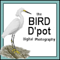 **8c Bird D&#039;pot