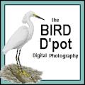 **8c Bird D'pot