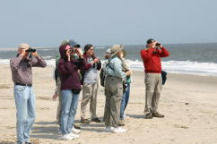 Seeking the Piping Plover